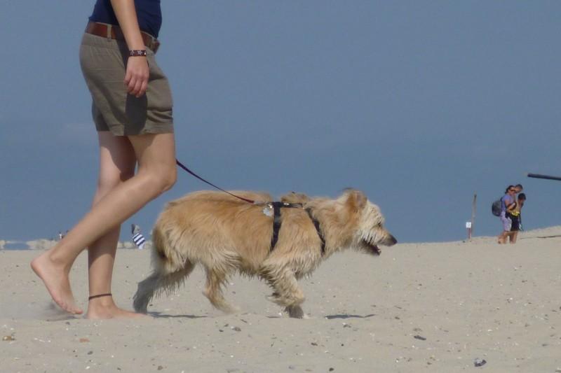 Hund am Hundestrand auf Borkum